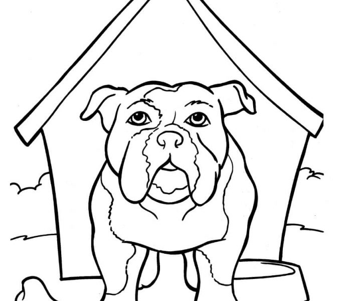 678x600 Draw French Bulldog Coloring Pages 18 In Line Drawings With French