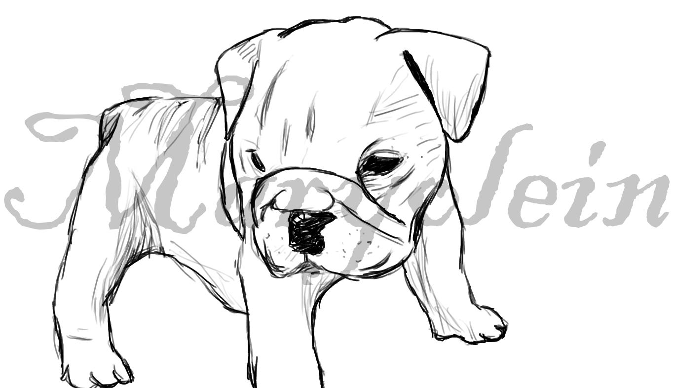 1366x786 Drawing Of A Bulldog Drawn Bulldog Bulldog Puppy