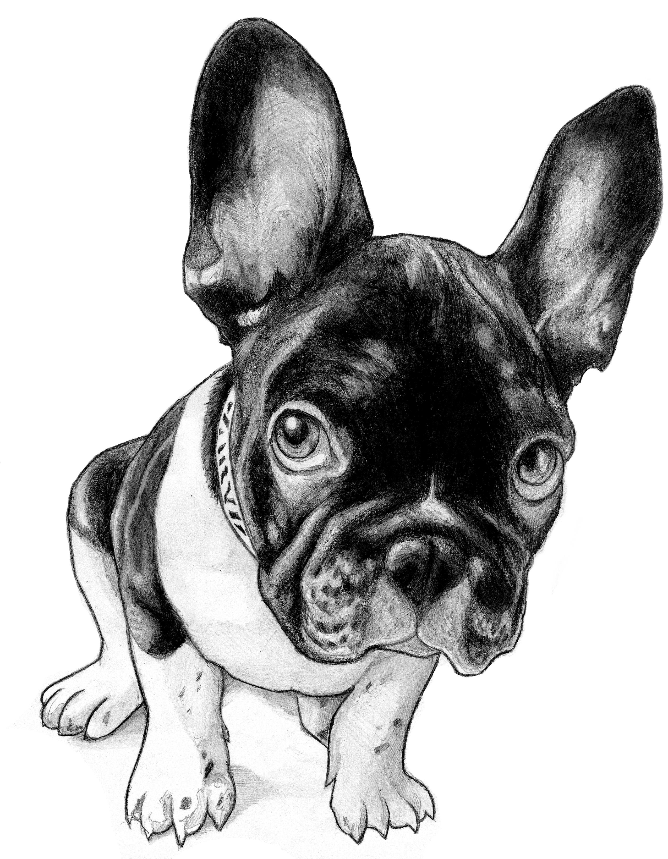 2550x3280 French Bulldog Line Drawing