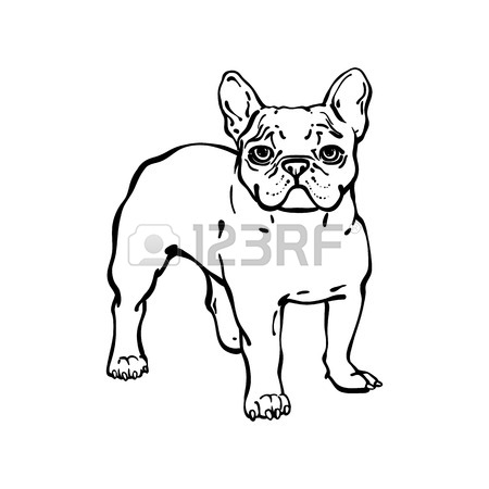 450x450 Set Of Hand Drawn Vector French Bulldogs. Illustration In Line