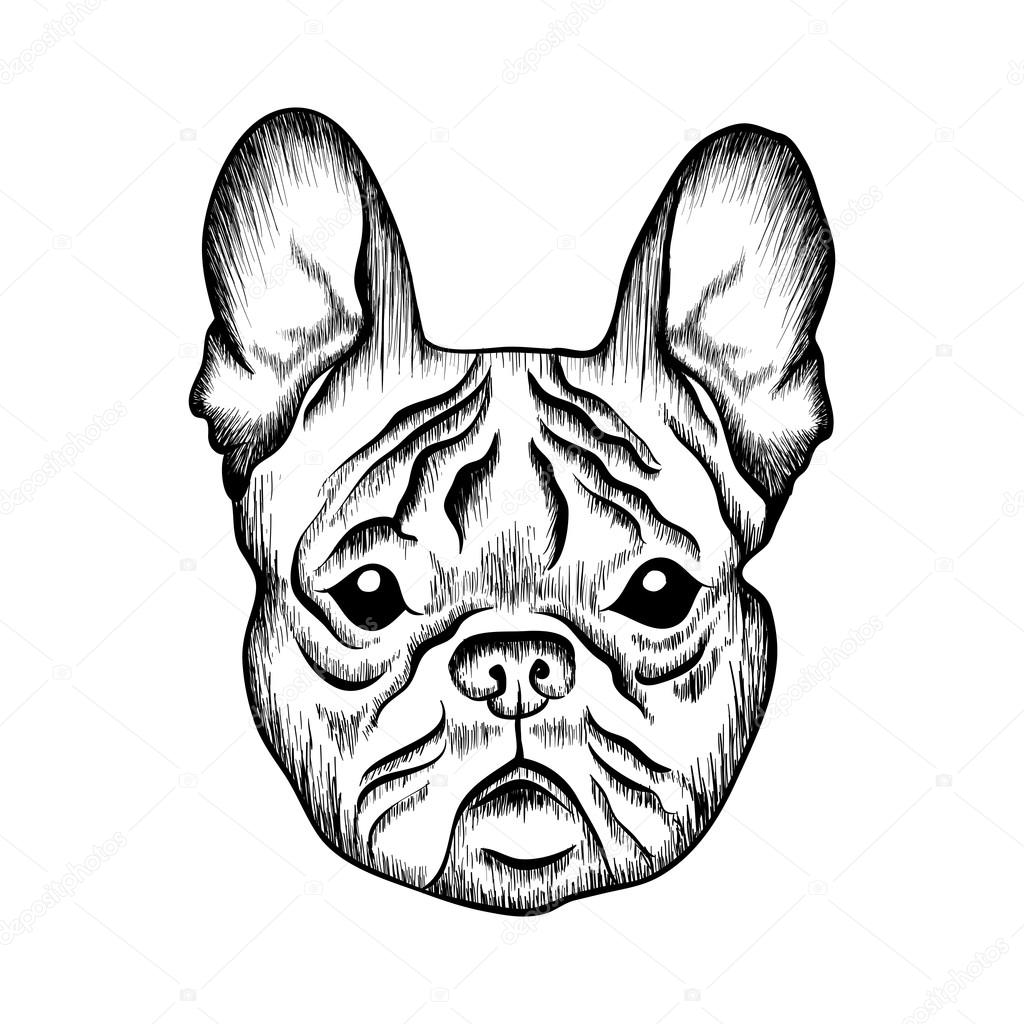 1024x1024 Sketch French Bulldog Stock Vector I Panki