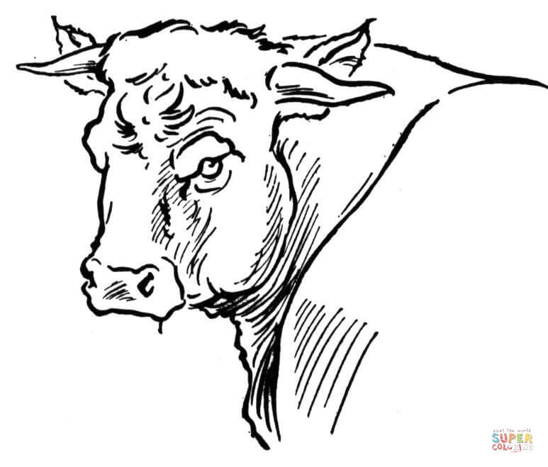 773x659 Bull Portait Coloring Page Free Printable Coloring Pages