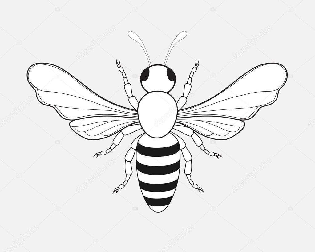 1023x817 Cartoon Bumblebee Drawing Stock Vector Baavli