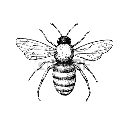 450x450 Antique Bee Stock Photos Amp Pictures. Royalty Free Antique Bee