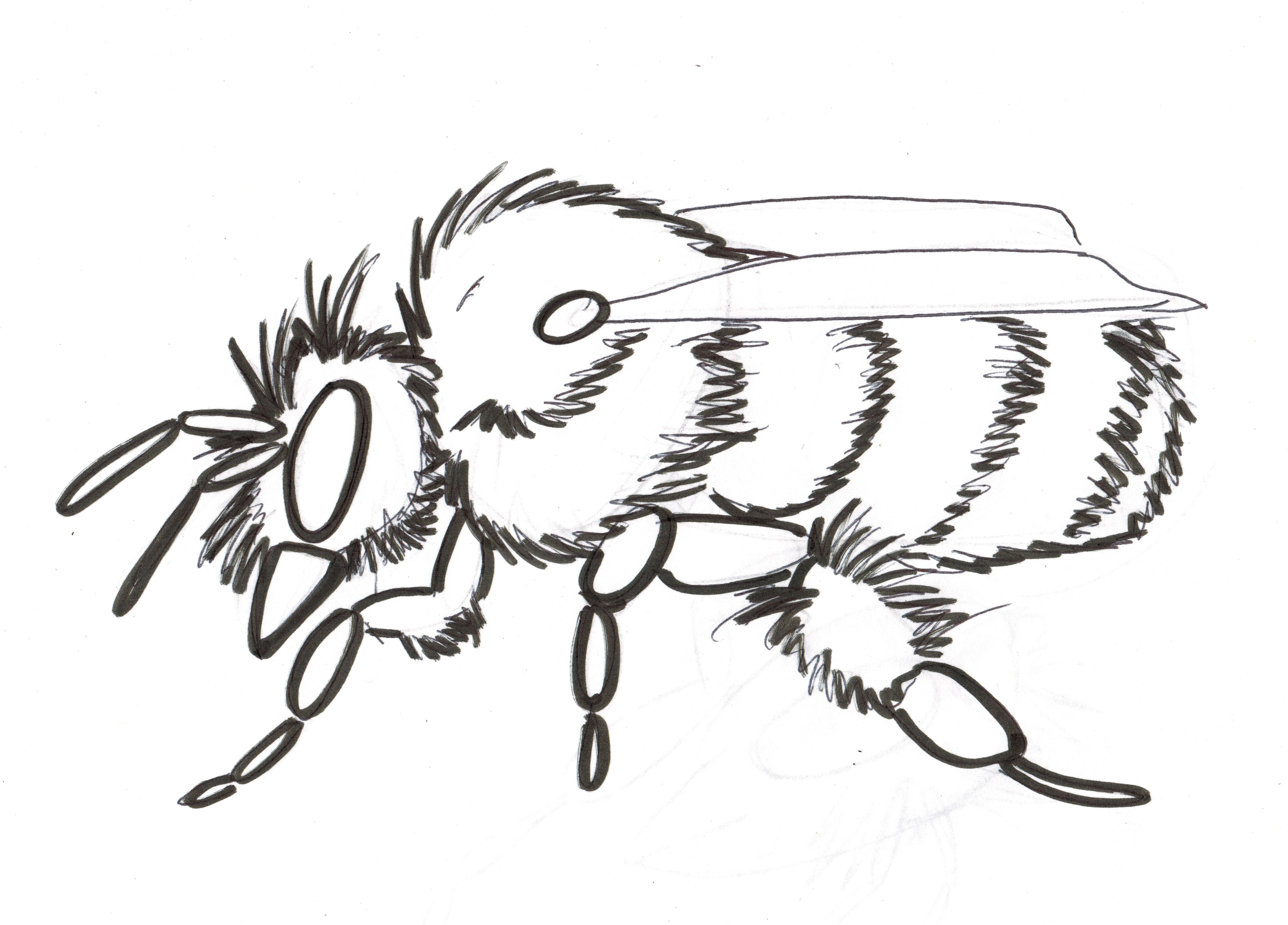 Bumblebee Insect Drawing at GetDrawings   Free download