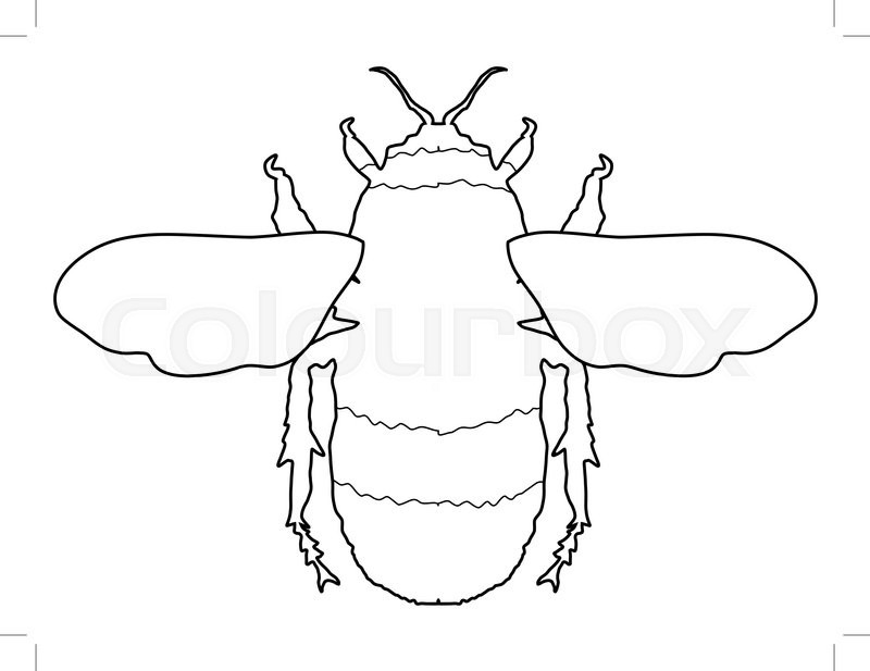 Bumblebee Insect Drawing Bumblebee Insect Drawi...