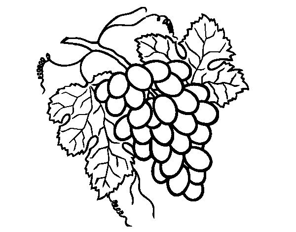 600x470 Bunch Of Grapes Coloring Page