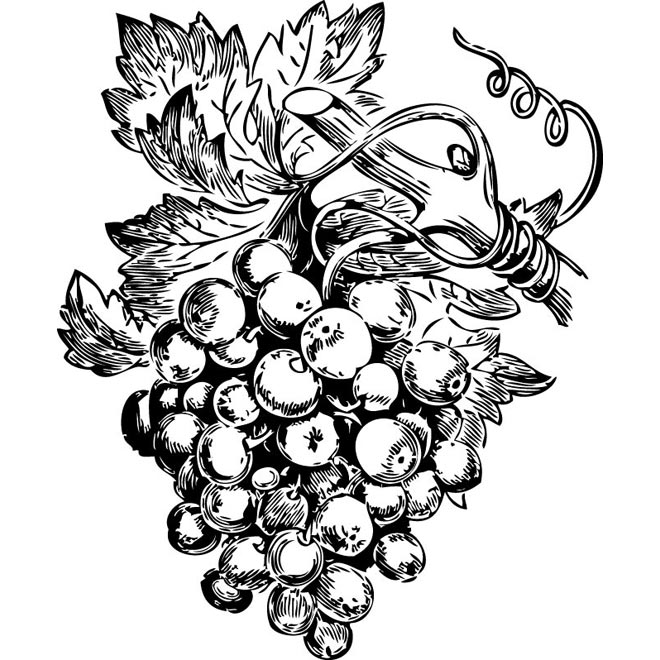 660x660 Drawn Fruit Grape Plant