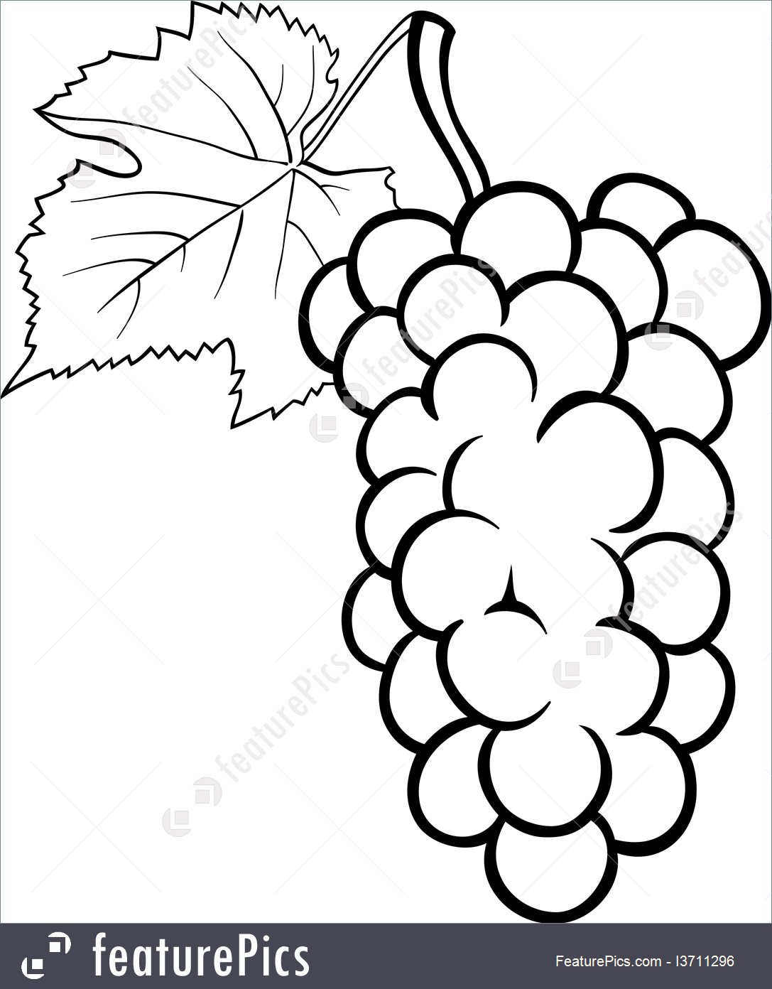 1087x1392 Grapes Design For Coloring Book Illustration