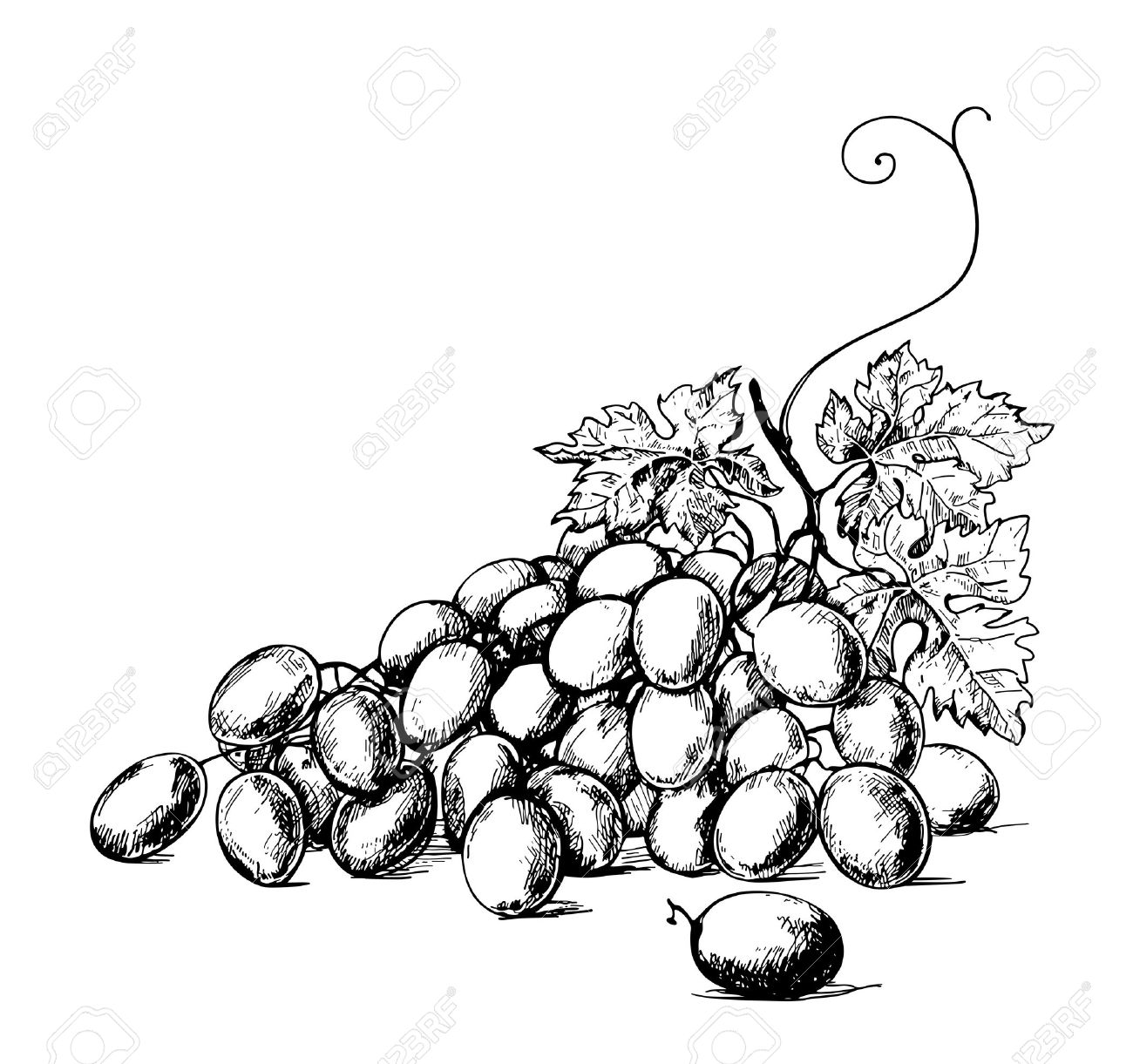 1300x1221 Sketch Illustration Of Bunch Of Grapes Royalty Free Cliparts