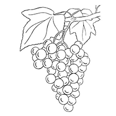 230x230 Top 25 Free Printable Lovely Grapes Coloring Pages Online