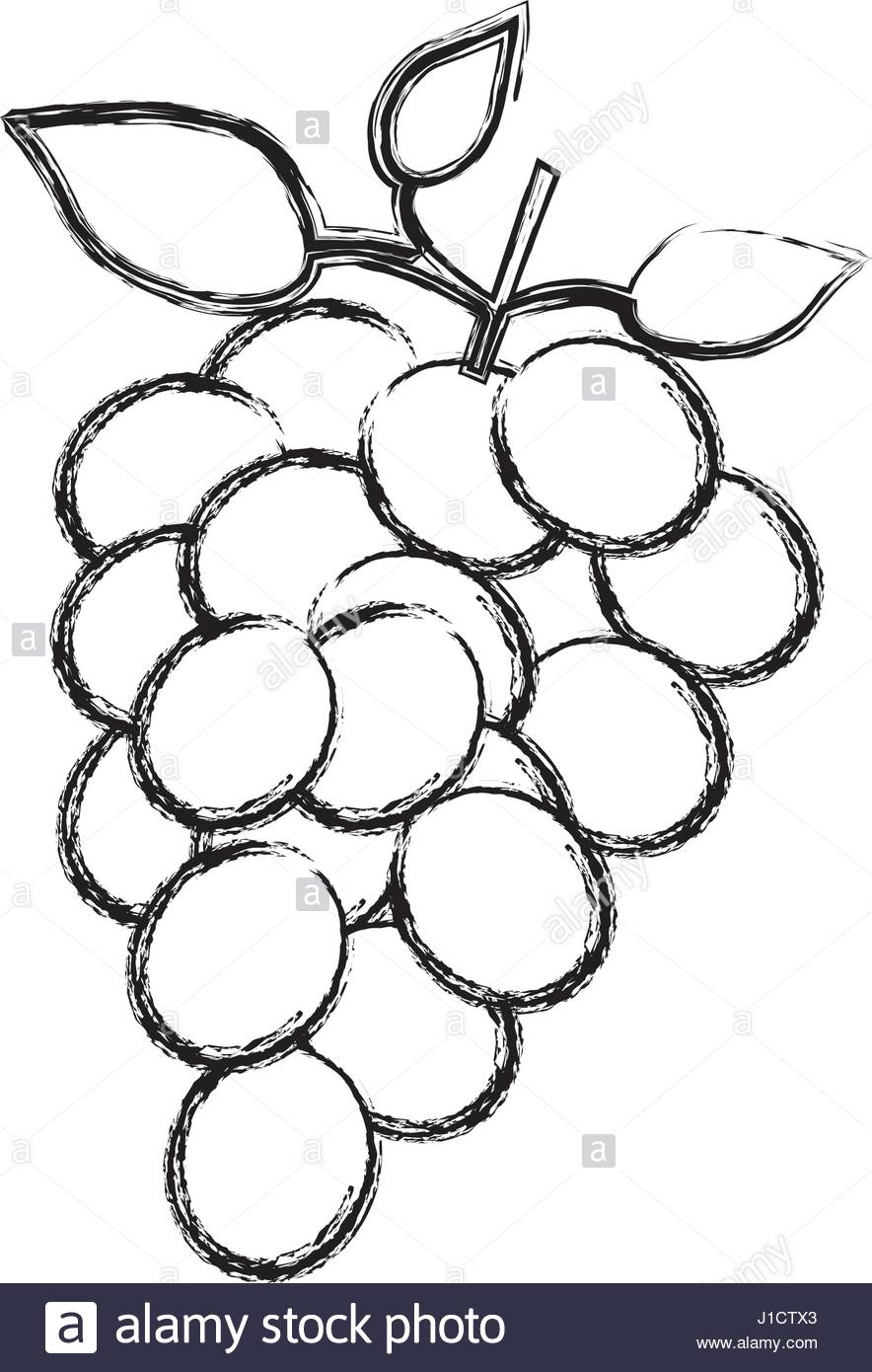 884x1390 Monochrome Sketch Silhouette Of Bunch Of Grapes Stock Vector Art