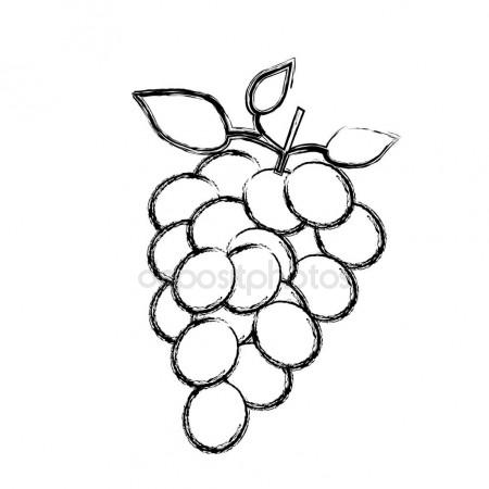 450x450 Monochrome Sketch Silhouette Of Bunch Of Grapes Stock Vector