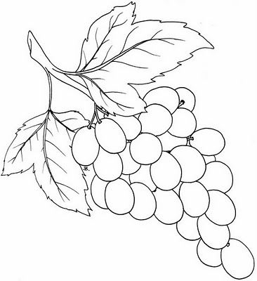 366x400 Bunch Of Grapes Bunch Of Graoes Template Coloring
