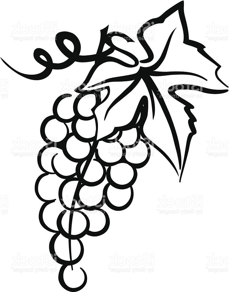 802x1024 Bunch Of Grapes Simple Drawing With Leaf Swirly Vine Vector