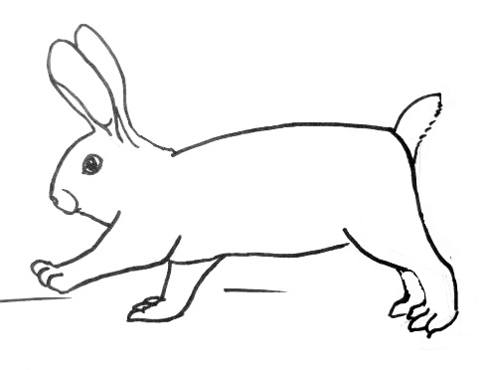 490x370 How To Draw A Rabbit