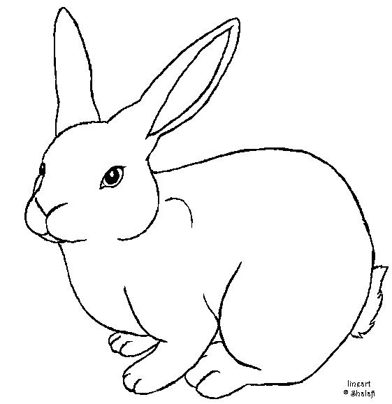 561x578 Bunny Rabbit Drawing Free Download