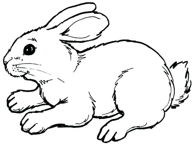 650x488 Outline Of Bunny Rabbit Template Printable Outline Of Easter Bunny