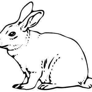 300x300 Adult Rabbit Color Pages Roger Rabbit Color Pages. Color Pages