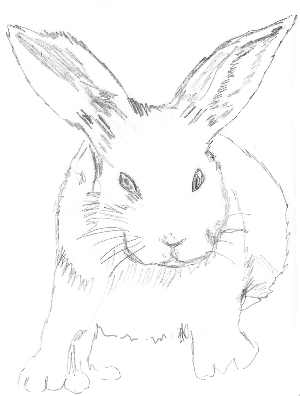 Bunny Rabbit Drawing