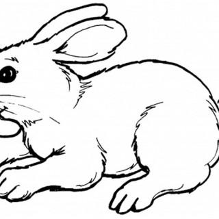 320x320 Tag For Drawing Of Rabbit Quartz Bunny Animals Rabbit Hare Dutch
