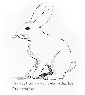 329x365 86 Best Sketching Rabbit Images On Drawing Ideas