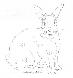 300x323 Hop To It And Learn To Draw A Bunny Rabbit With These Easy Steps