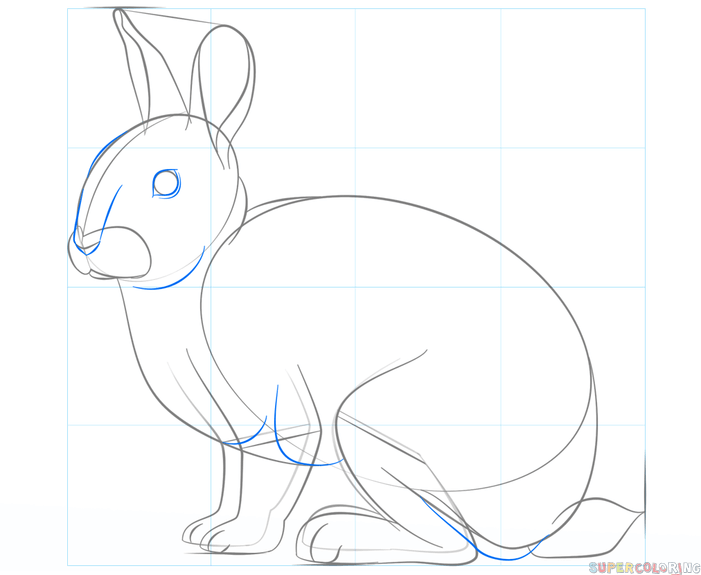 701x575 How To Draw A Rabbit Step By Step Drawing Tutorials