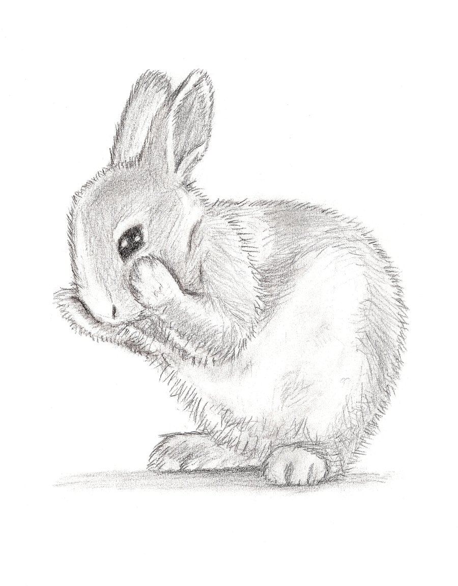 bunny rabbits drawing at getdrawings com free for personal use