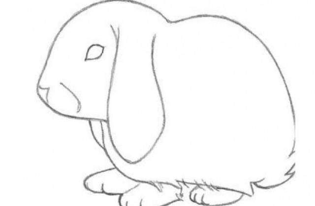 640x420 Tag For Bunny Rabbit Drawing Drawings Bunny Drawing Rabbit