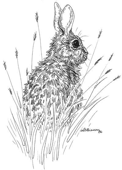 400x554 Rabbit Sketch