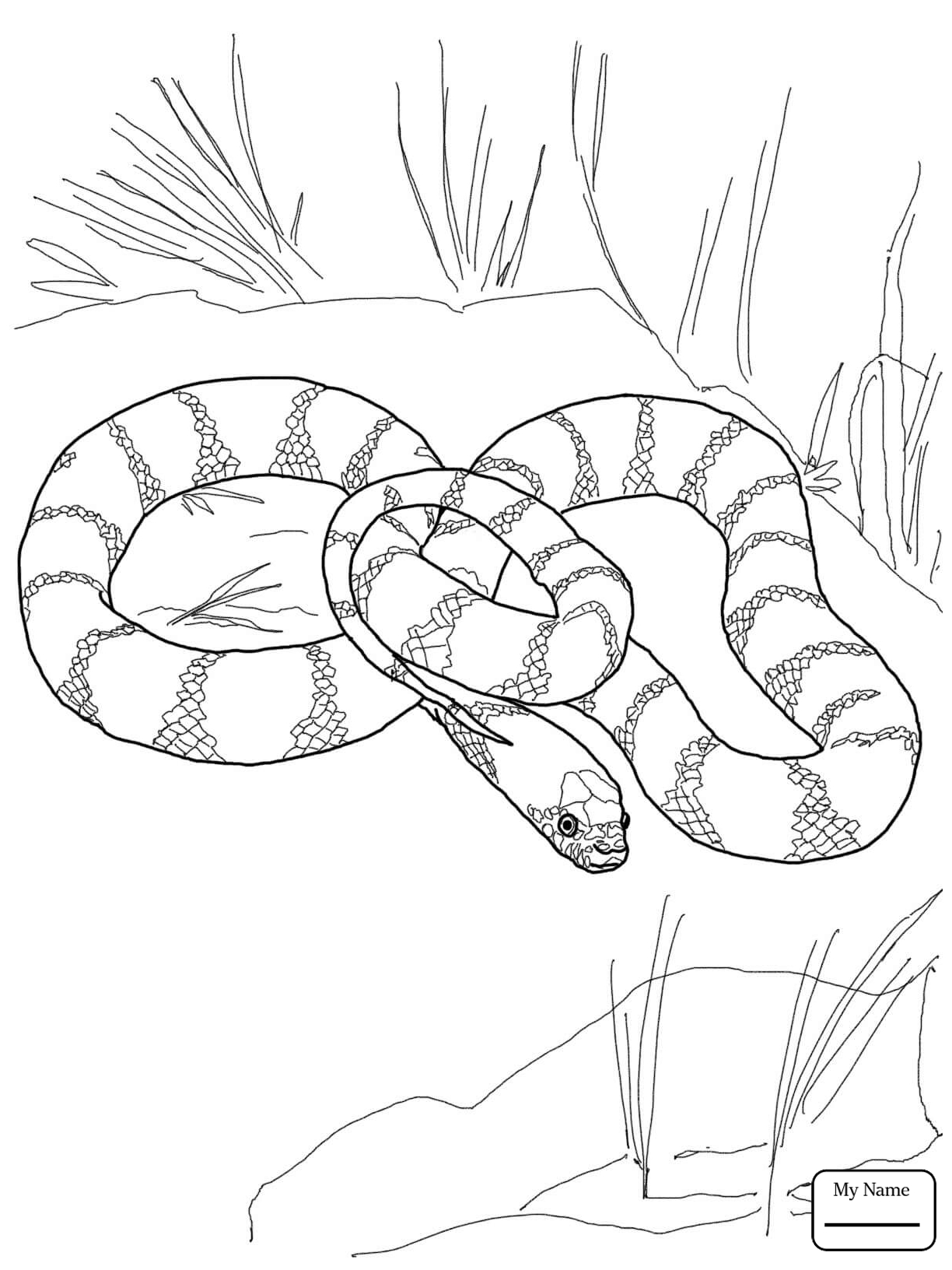 1224x1632 Burmese Python Reptiles Coloring Pages