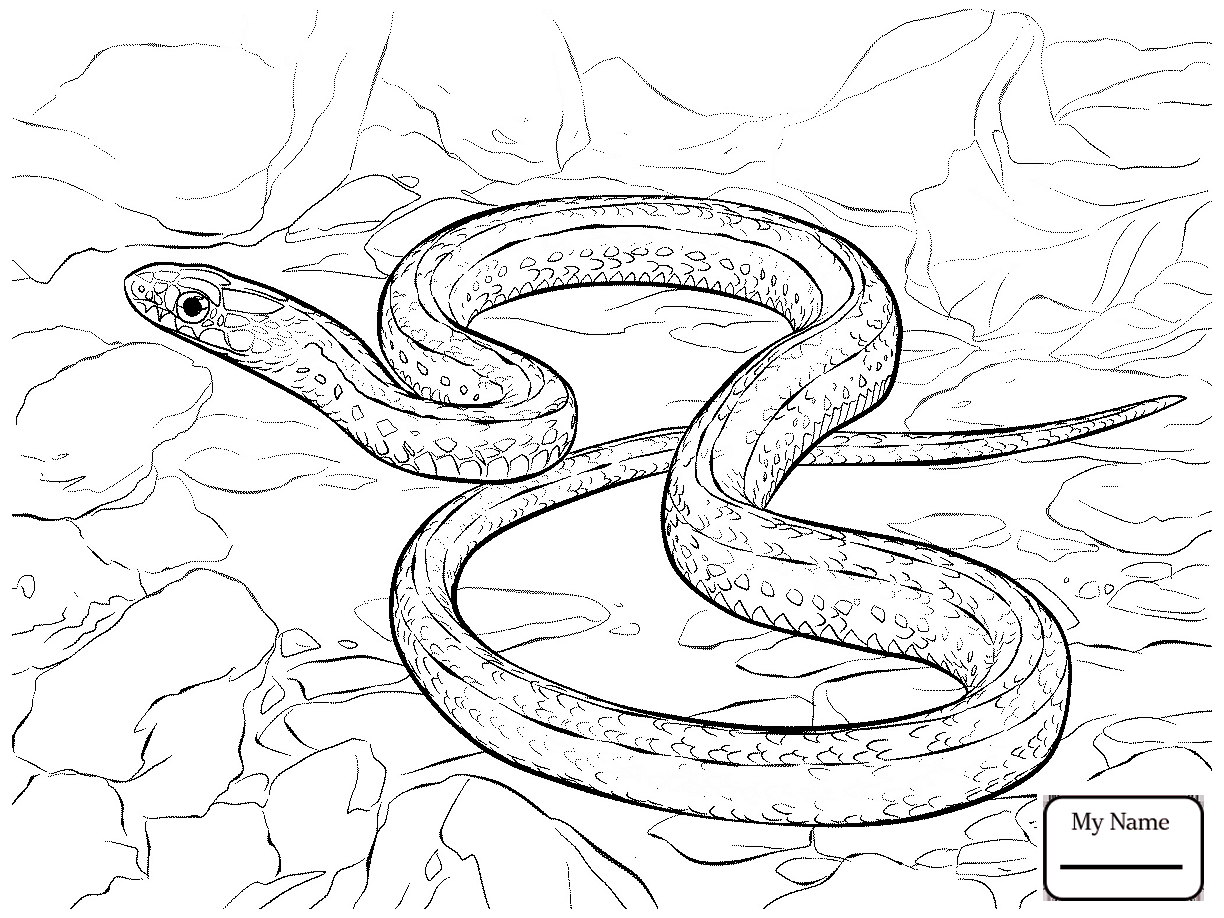 1224x918 Reptiles Ball Python Coloring Pages