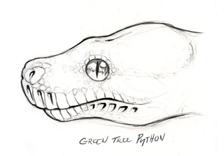 444x311 Skullbird Sketches Of Various Constrictor Profiles,