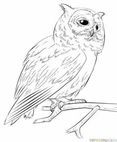236x286 Learn How To Draw A Tawny Owl (Owls) Step By Step Drawing
