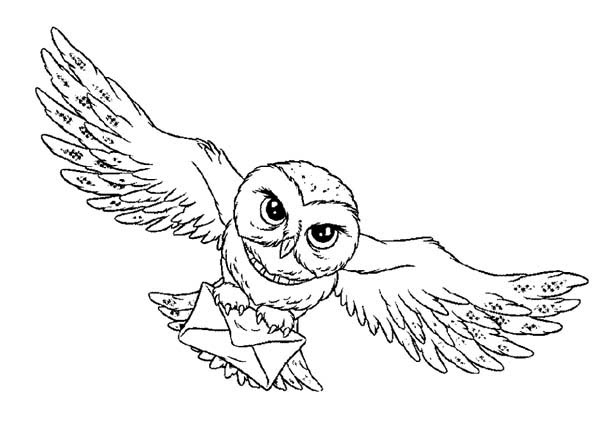 600x425 Owl, Harry Potter Owl Coloring Page.jpg A A Harry Potter