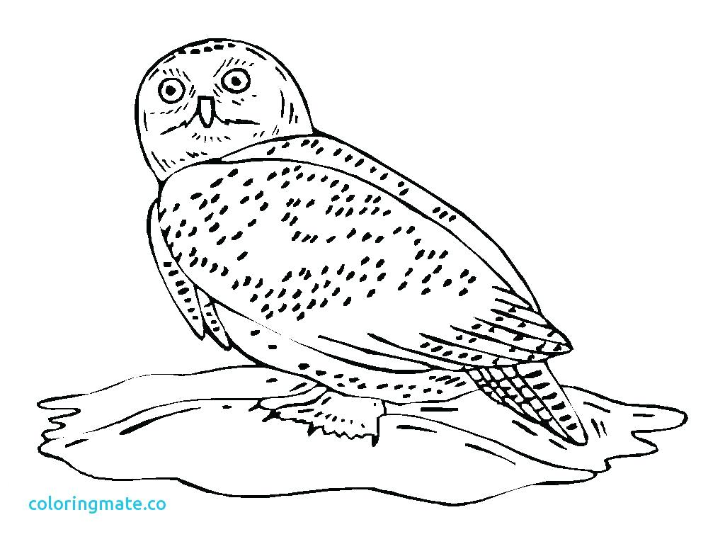 1024x768 Owl Coloring Pages For Adults Free Printable Kids Mandala Smart