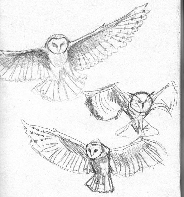 590x629 30 Best Owls Images On Barn Owls, Animal Kingdom
