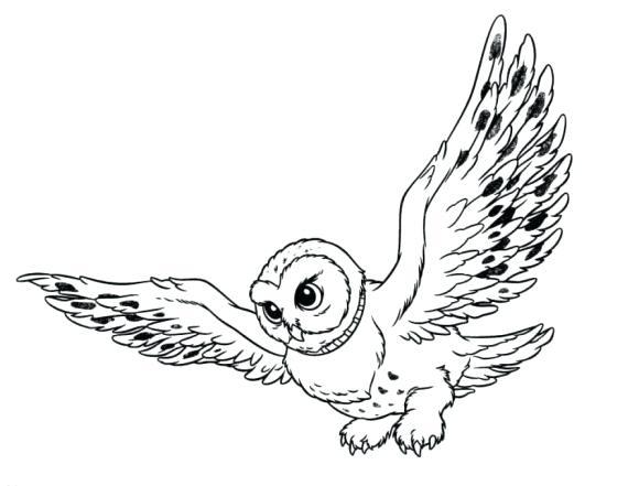 580x441 Snowy Owl Coloring Page Snowy Owl Coloring Pages Burrowing Owl