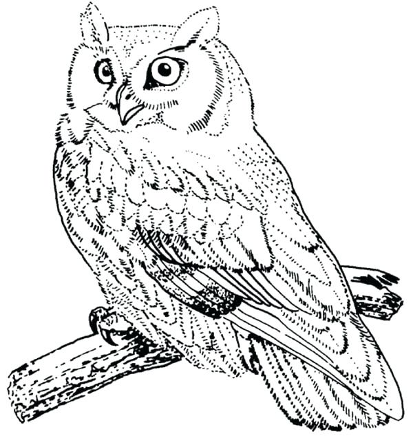 600x646 Snowy Owl Coloring Pages Free Owl Coloring Pages In Addition