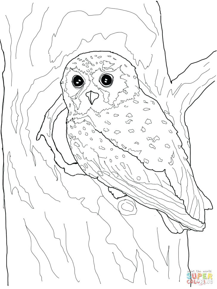 728x971 Barn Owl Coloring Page