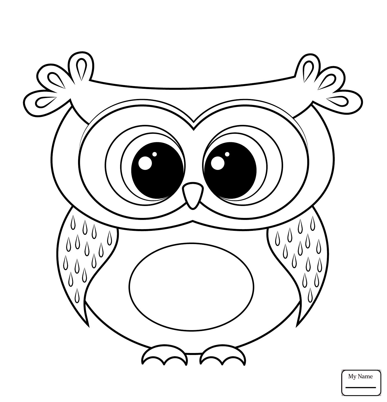 1557x1616 Owls
