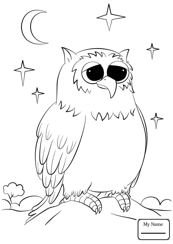 866x1224 Owls
