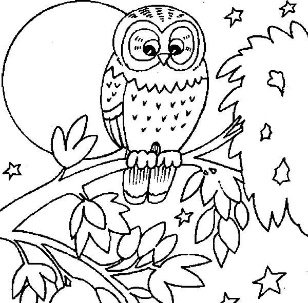 600x591 Burrowing Owl Coloring Page Coloring Page Love Owl