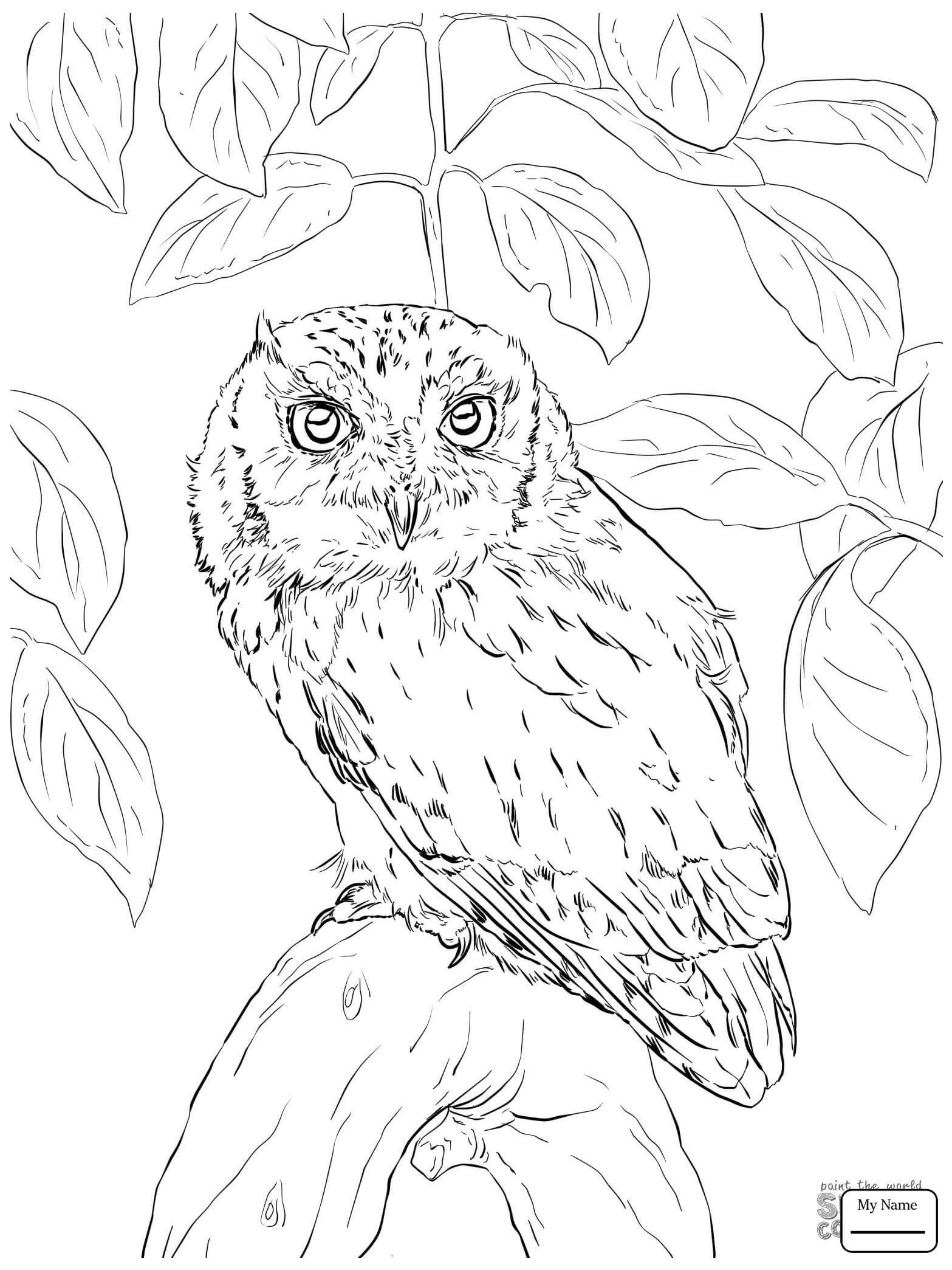 1567x2089 Burrowing Owl Coloring Sheets Coloring Sheets