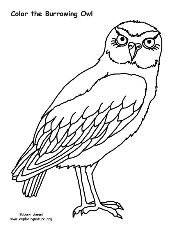 612x792 Burrowing Owl Coloring Nature