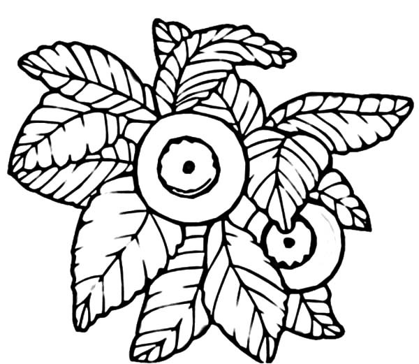 600x521 Drawing Blueberry Bush Coloring Pages Best Place To Color