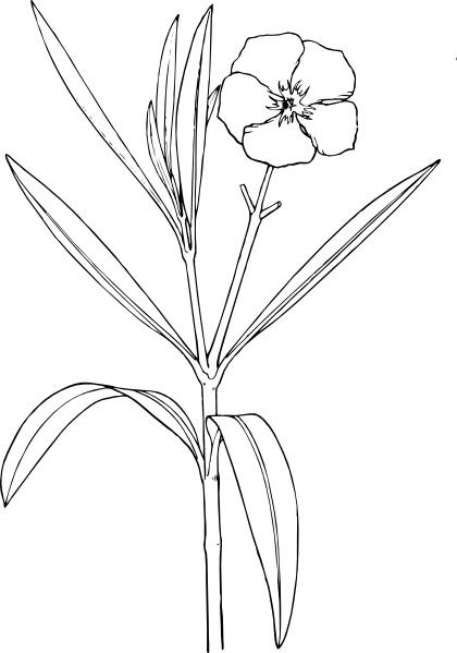 420x599 Flower Bush Clip Art Free Vector In Open Office Drawing Svg ( Svg