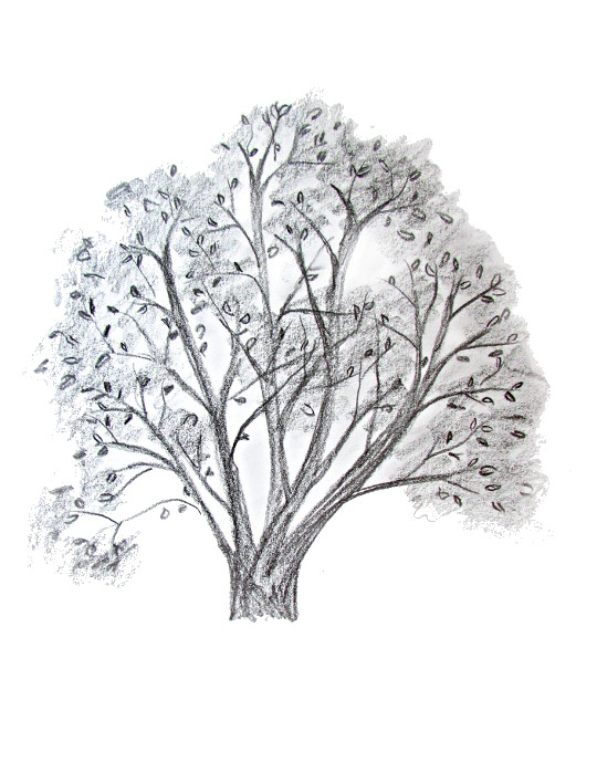 540x690 How To Draw A Tree