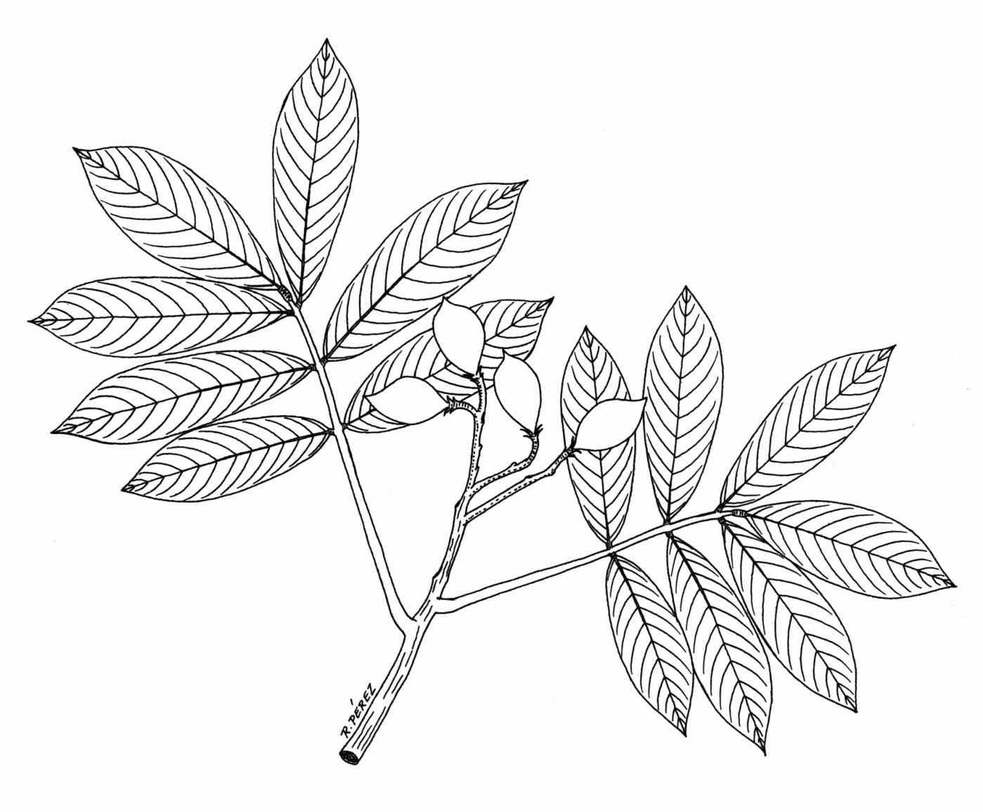 1399x1156 How To Draw Plants